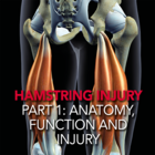 Hamstring Injury Part 1: Anatomy, Function and Injury [Article]