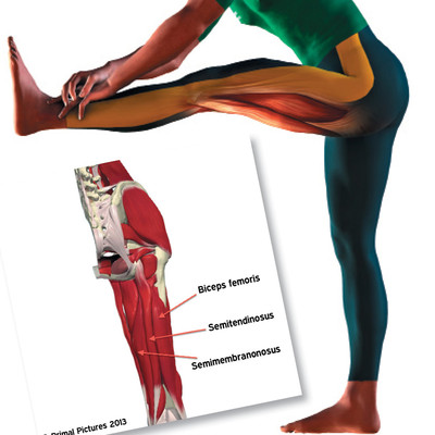 Sprint-Related Hamstring Injuries: The Current State of Play [Article]